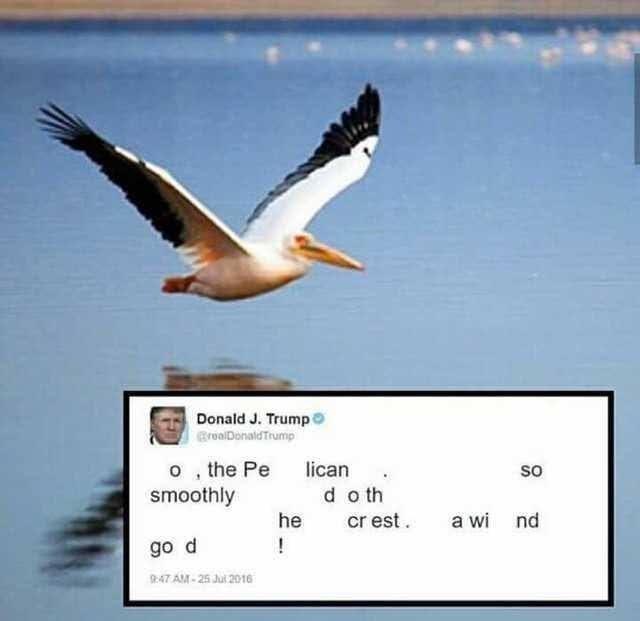 Bird - Donald J. Trump BroalDonaldTrump o, the Pe smoothly lican so d o th cr est. he a wi nd go d :47 AM - 25 Jui 2016