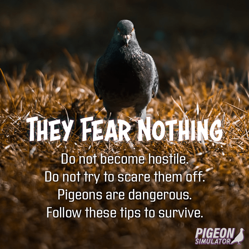 Bird - THEY FEAR NOTHING Do not become hostile. Do not try to scare them off. Pigeons are dangerous. Follow these tips to survive. PIGEON SIMULATOR