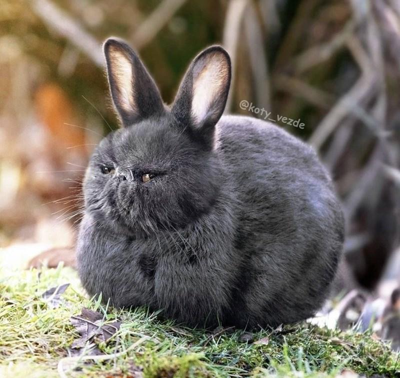 Rabbit - @koty_vezde