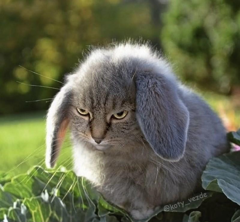 Cat - @koty_vezde