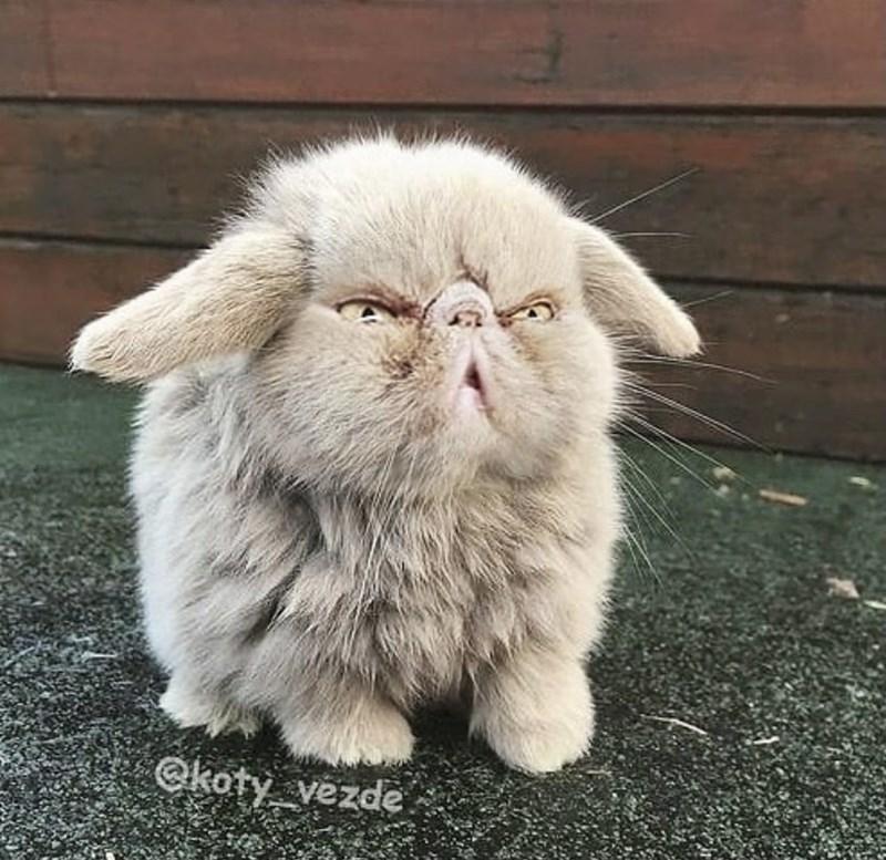 Cat - Okoty vezde