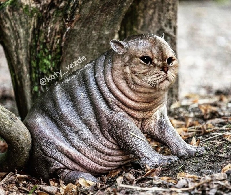 Felidae - @koty_vezde