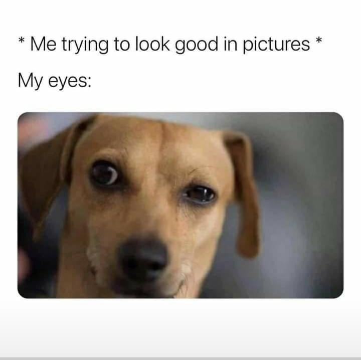 Dog - * Me trying to look good in pictures * My eyes: