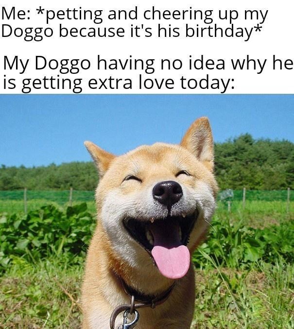 Dog - Me: *petting and cheering up my Doggo because it's his birthday* My Doggo having no idea why he is getting extra love today: