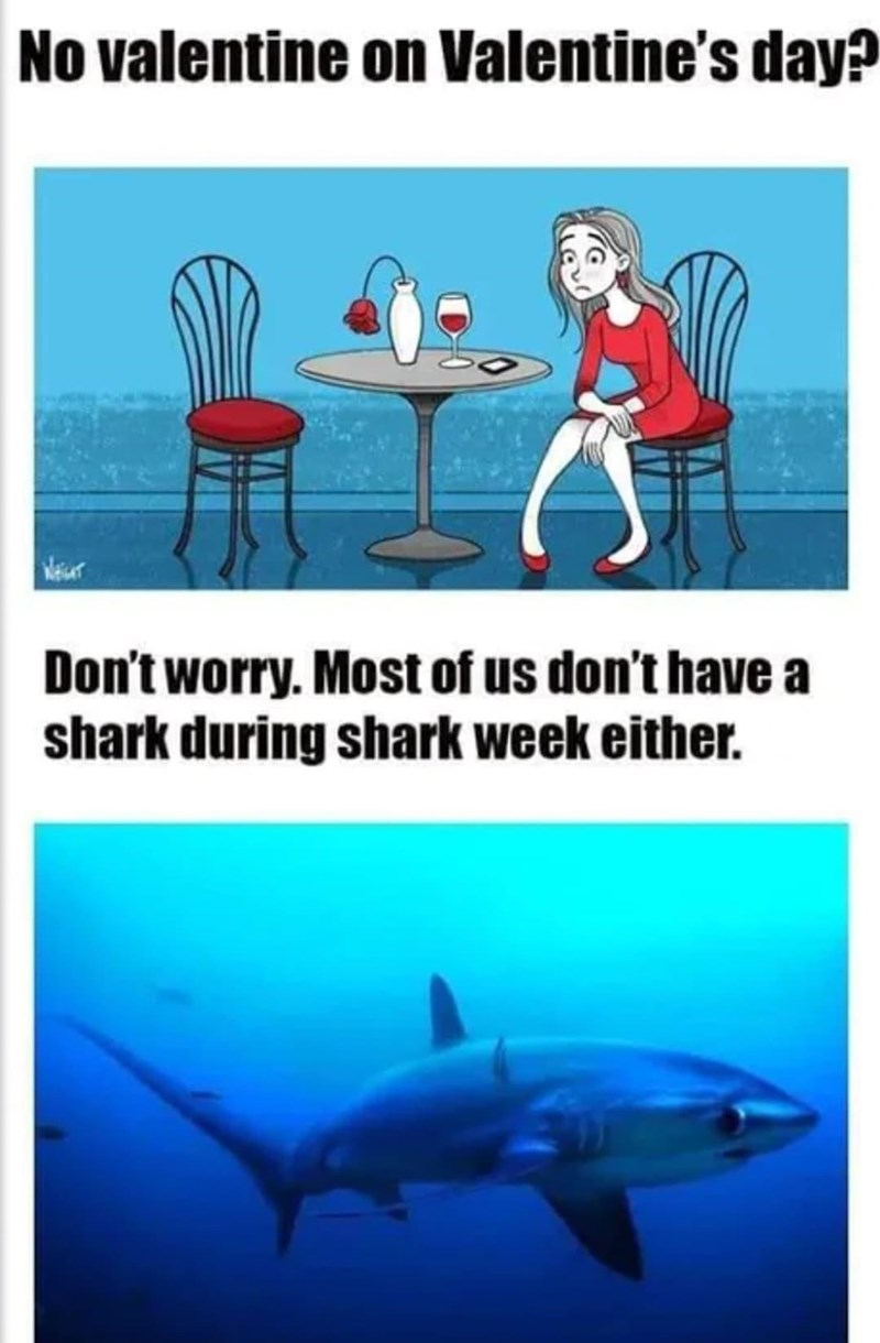 Blue - No valentine on Valentine's day? Don't worry. Most of us don't have a shark during shark week either.