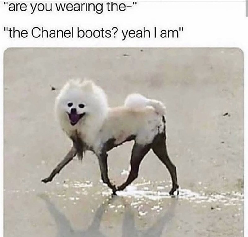 """Dog - """"are you wearing the-"""" """"the Chanel boots? yeah l am"""""""