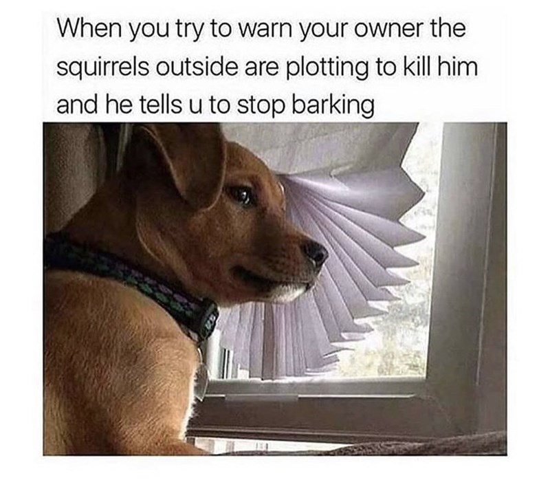 Dog - When you try to warn your owner the squirrels outside are plotting to kill him and he tells u to stop barking