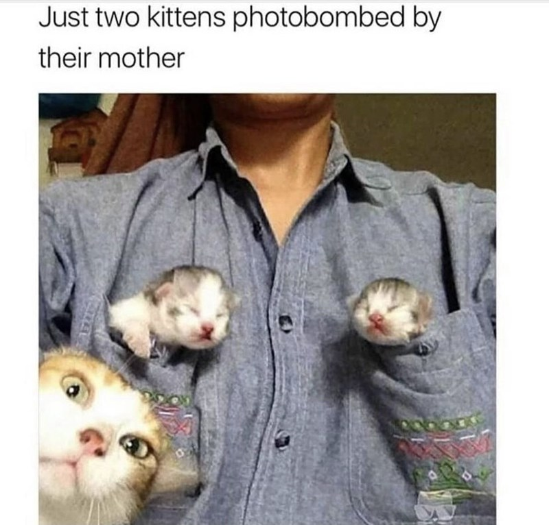 Vertebrate - Just two kittens photobombed by their mother