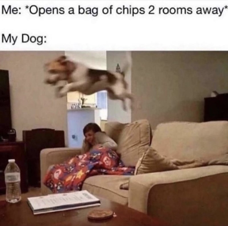 Property - Me: *Opens a bag of chips 2 rooms away* My Dog: