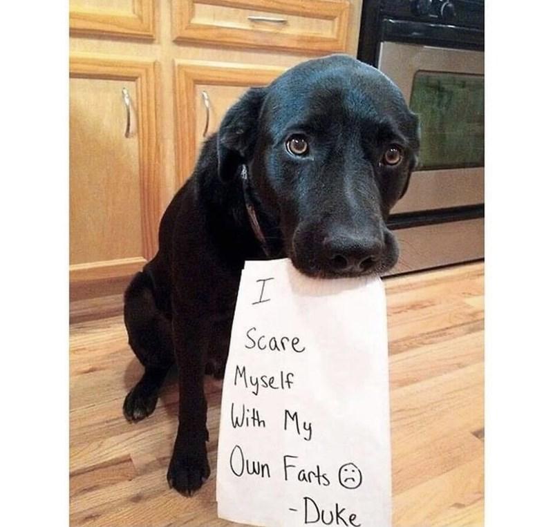 Dog - Scare Myself With My Oun Farts O - Duke