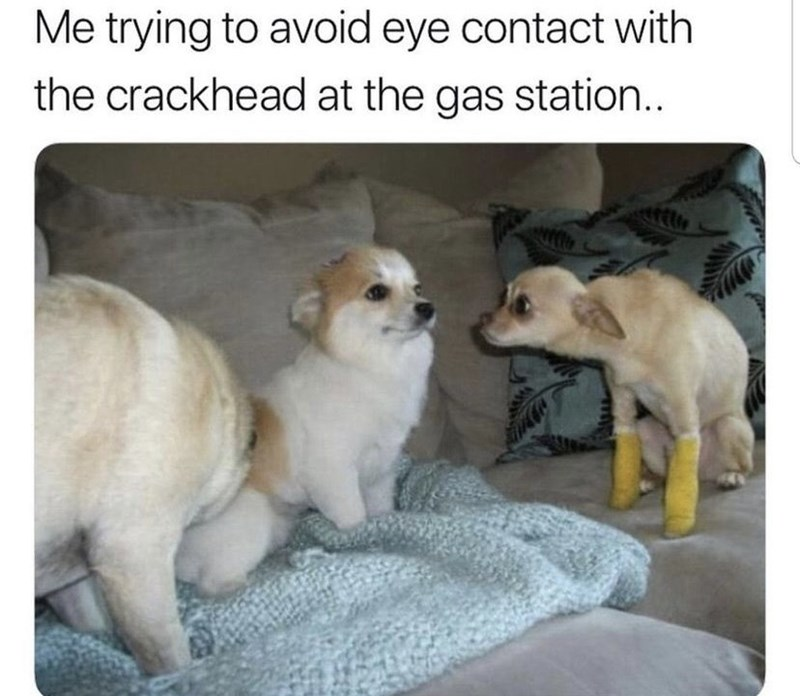 Dog - Me trying to avoid eye contact with the crackhead at the gas station..