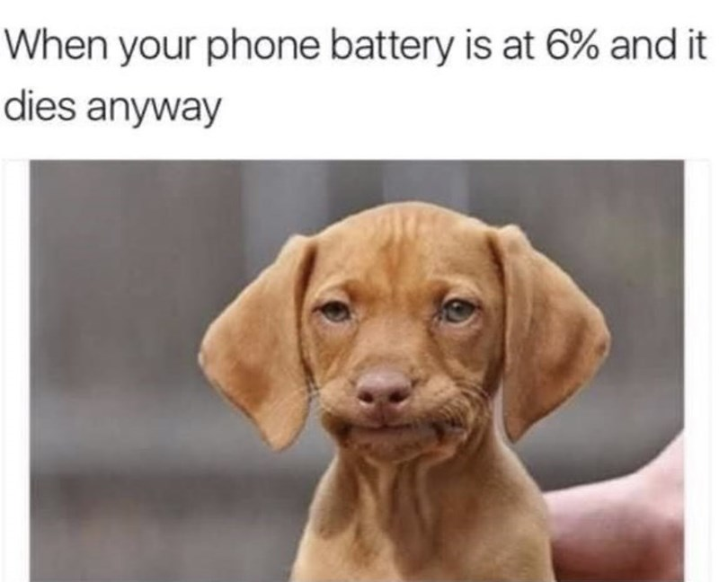 Dog - When your phone battery is at 6% and it dies anyway
