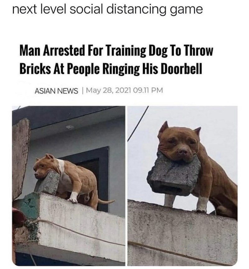 Brown - next level social distancing game Man Arrested For Training Dog To Throw Bricks At People Ringing His Doorbell ASIAN NEWS   May 28, 2021 09.11 PM