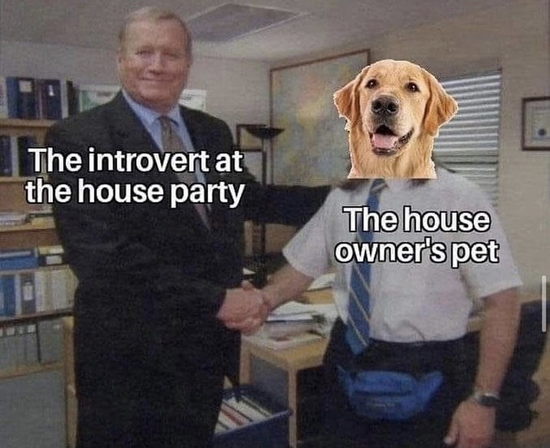 Dog - The introvert at the house party The house owner's pet