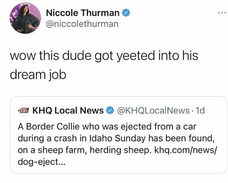 Font - Niccole Thurman @niccolethurman wow this dude got yeeted into his dream job 1G KHQ Local News @KHQLocalNews 1d A Border Collie who was ejected from a car during a crash in Idaho Sunday has been found, on a sheep farm, herding sheep. khq.com/news/ dog-eject...
