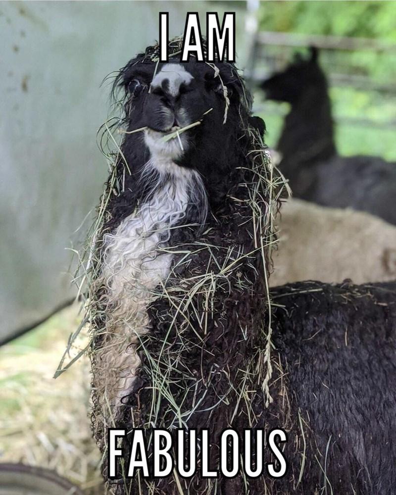 Plant - AM FABULOUS