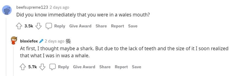 Rectangle - beefsupreme123 2 days ago Did you know immediately that you were in a wales mouth? 3.5k 5 J Reply Give Award Share Report Save bloxiefox 2 days ago At first, I thought maybe a shark. But due to the lack of teeth and the size of it I soon realized that what I was in was a whale. 5.7k Reply Give Award Share Report Save