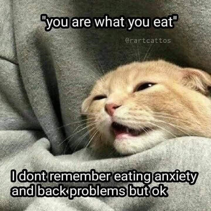 """Cat - """"you are what you eat"""" @rartcattos Odont remember eating anxiety and back problems but ok"""