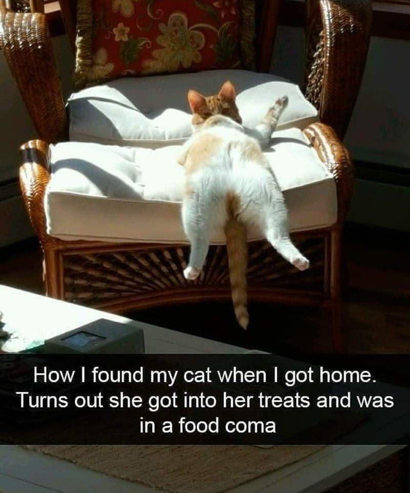 Furniture - How I found my cat when I got home. Turns out she got into her treats and was in a food coma