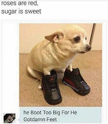 Dog - roses are red, sugar is sweet @veganoverloid he Boot Too Big For He Gotdamn Feet