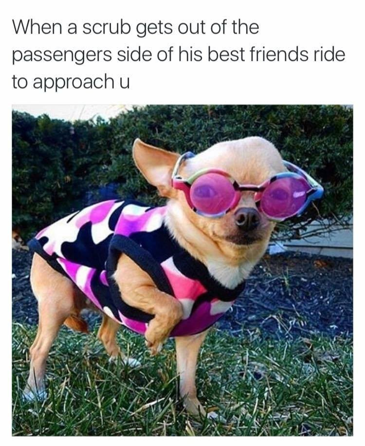 Dog - When a scrub gets out of the passengers side of his best friends ride to approach u