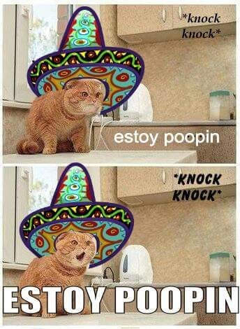 """Vertebrate - *knock knock* estoy poopin """"KNOCK KNOCK ESTOY POOPIN"""