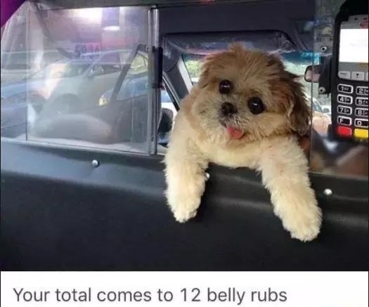 Dog - Your total comes to 12 belly rubs