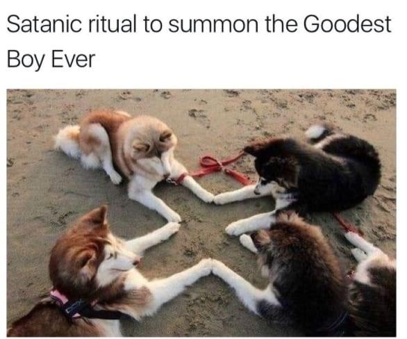 Cat - Satanic ritual to summon the Goodest Вoy Ever