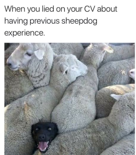 Vertebrate - When you lied on your CV about having previous sheepdog experience.