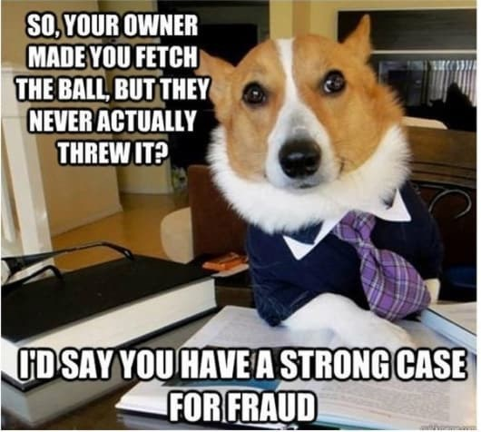 Dog - SO YOUR OWNER MADE YOU FETCH THE BALL, BUT THEY NEVER ACTUALLY THREW IT? FD SAY YOU HAVE A STRONG CASE FOR FRAUD