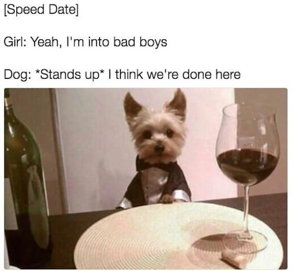 Dog - [Speed Date] Girl: Yeah, I'm into bad boys Dog: *Stands up* I think we're done here