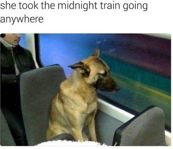 Dog - she took the midnight train going anywhere
