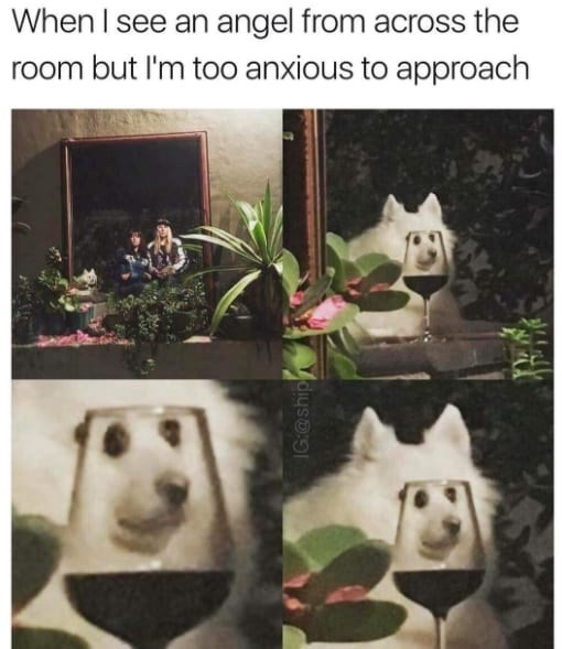 Plant - When I see an angel from across the room but I'm too anxious to approach IG@ship