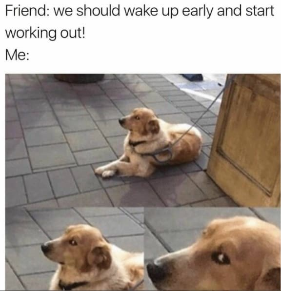 Dog - Friend: we should wake up early and start working out! Me: