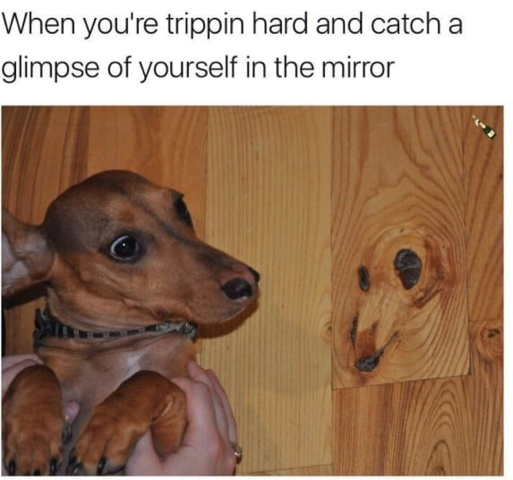 Dog - When you're trippin hard and catch a glimpse of yourself in the mirror