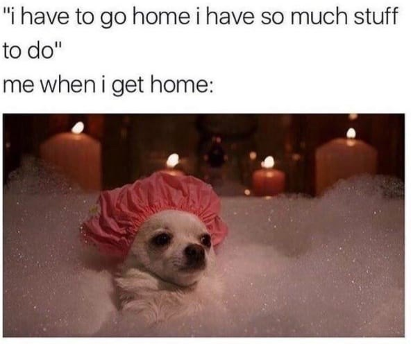 """Dog - """"i have to go home i have so much stuff to do"""" me when i get home:"""