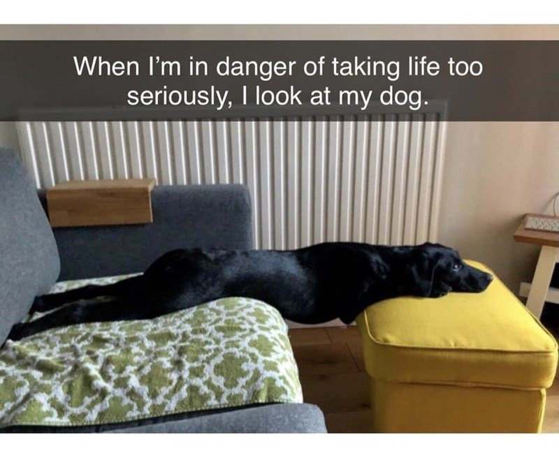 Furniture - When I'm in danger of taking life too seriously, I look at my dog.