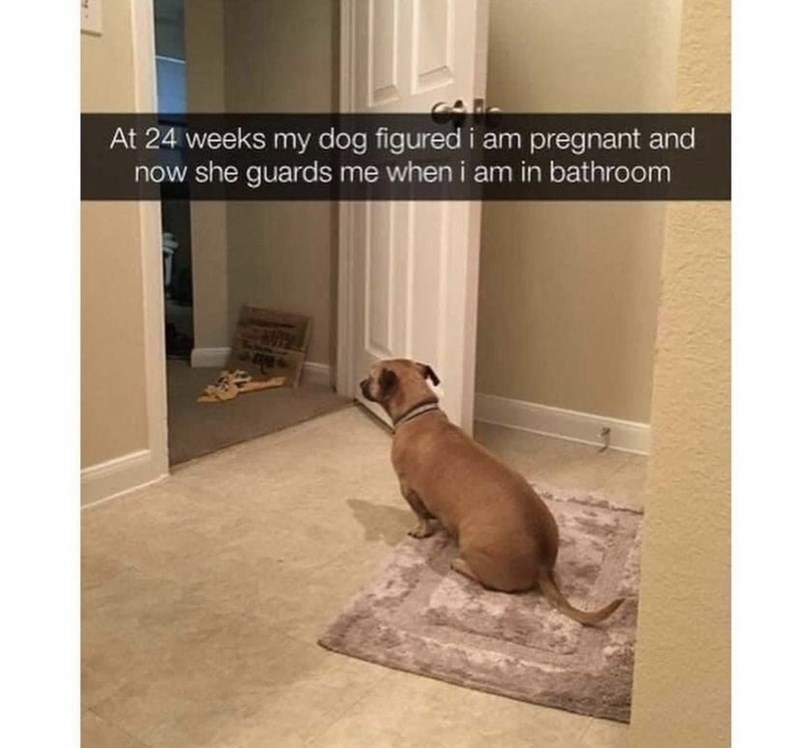 Dog - At 24 weeks my dog figured i am pregnant and now she guards me when i am in bathroom