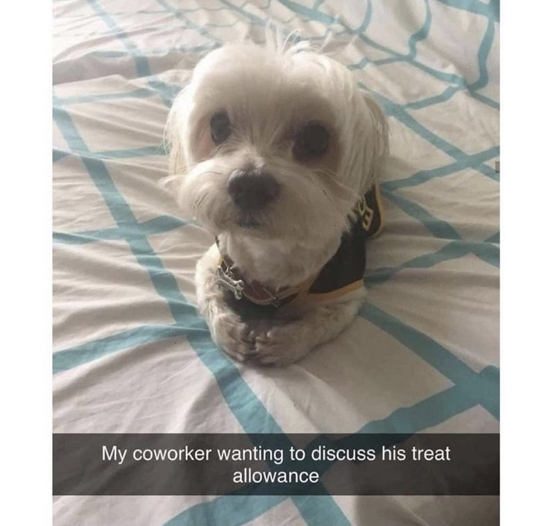 Dog - My coworker wanting to discuss his treat allowance