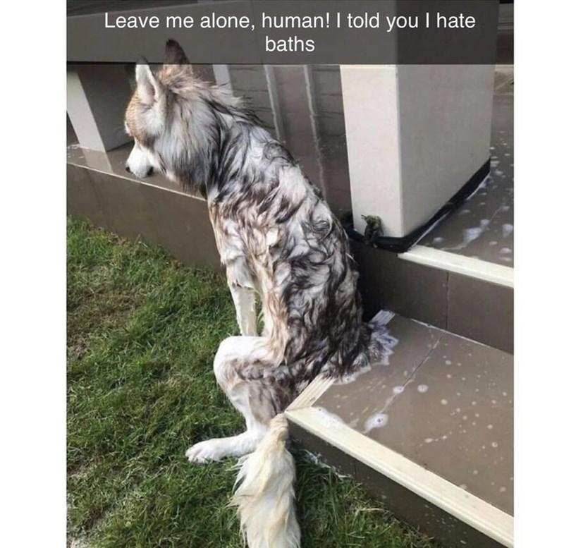 Dog - Leave me alone, human! I told you I hate baths