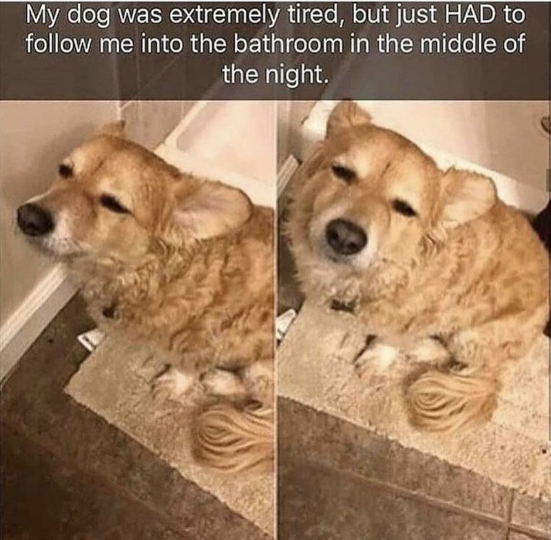 Dog - My dog was extremely tired, but just HAD to follow me into the bathroom in the middle of the night.