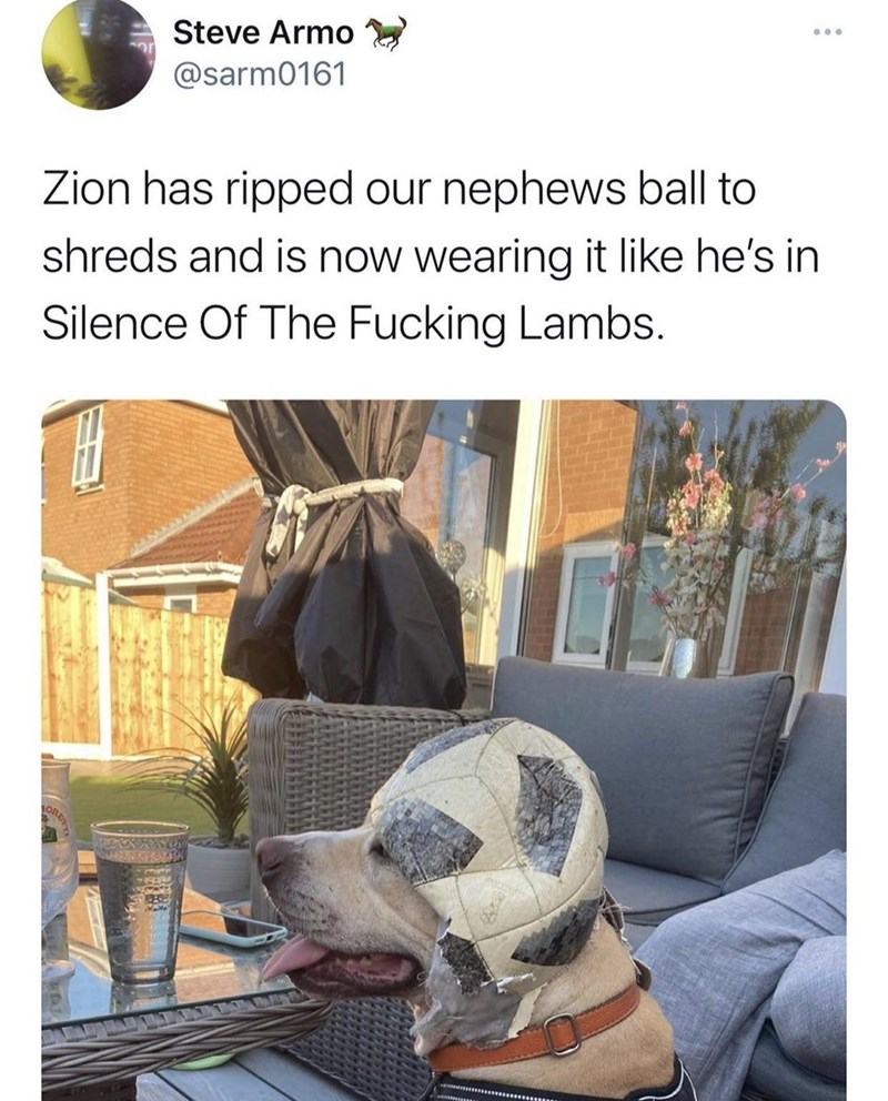 Property - Steve Armo @sarm0161 Zion has ripped our nephews ball to shreds and is now wearing it like he's in Silence Of The Fucking Lambs. ORE