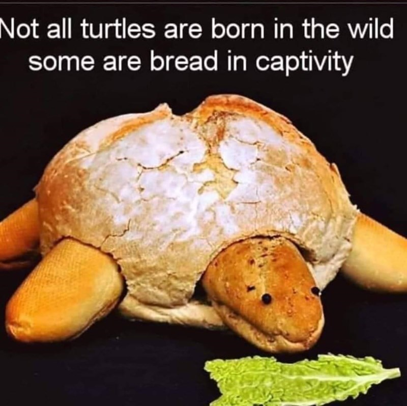 Food - Not all turtles are born in the wild some are bread in captivity