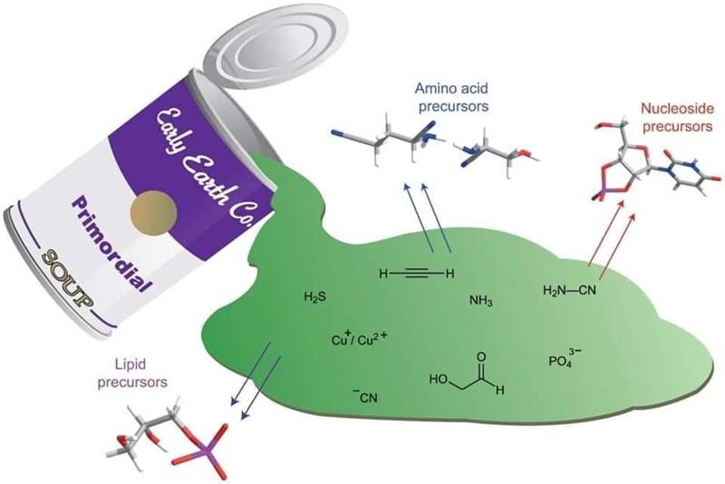 Ecoregion - Amino acid precursors Nucleoside precursors H =H H2N-CN H2S NH3 cu Cu?+ 3- Lipid PO4 HO precursors H. CN Carly Earth Co. Primordial SOUP-