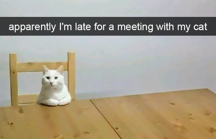 Cat - apparently I'm late for a meeting with my cat