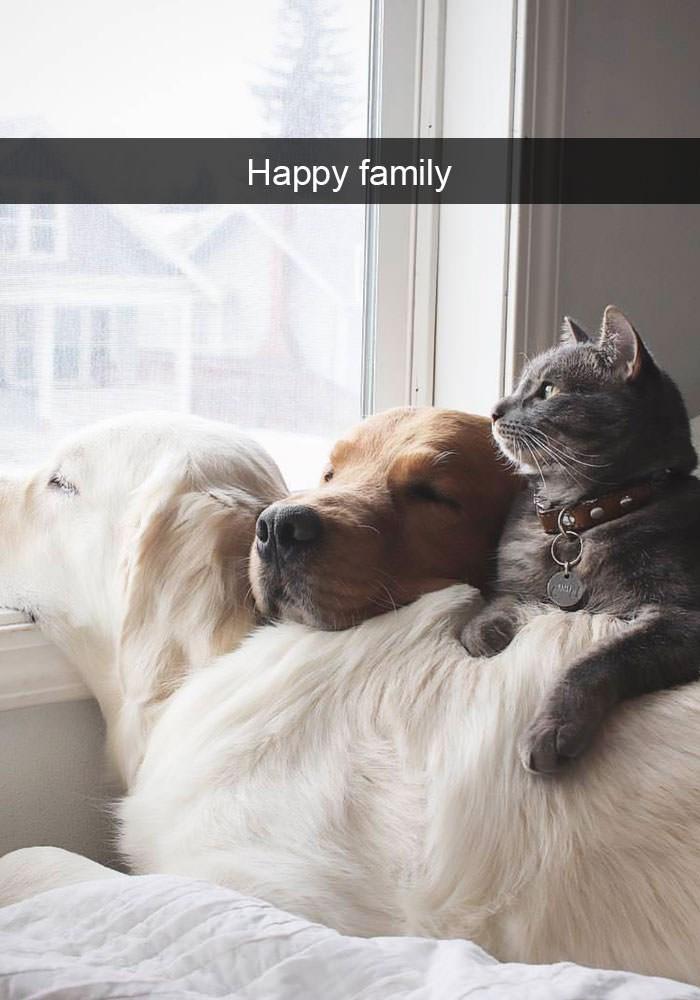 Dog - Happy family