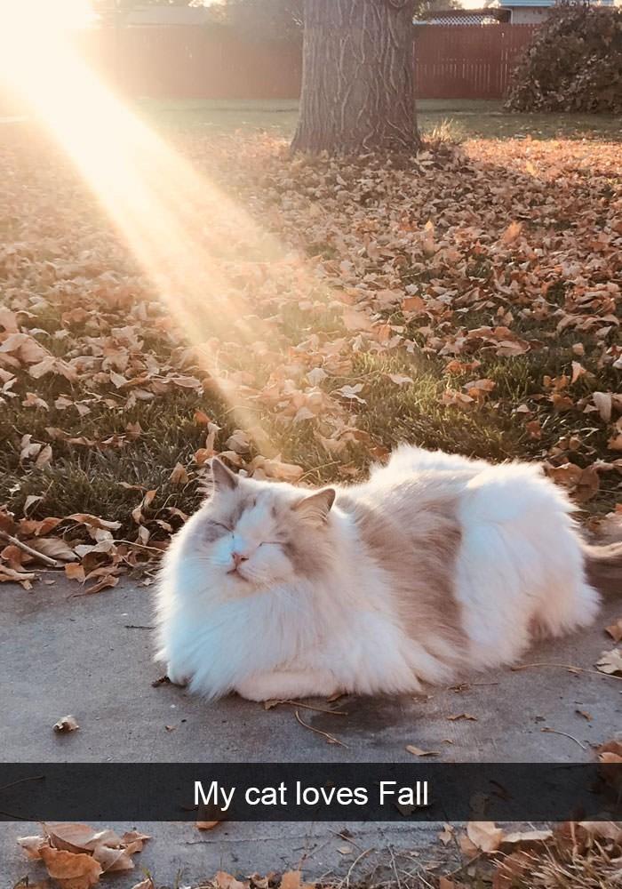 Cat - My cat loves Fall