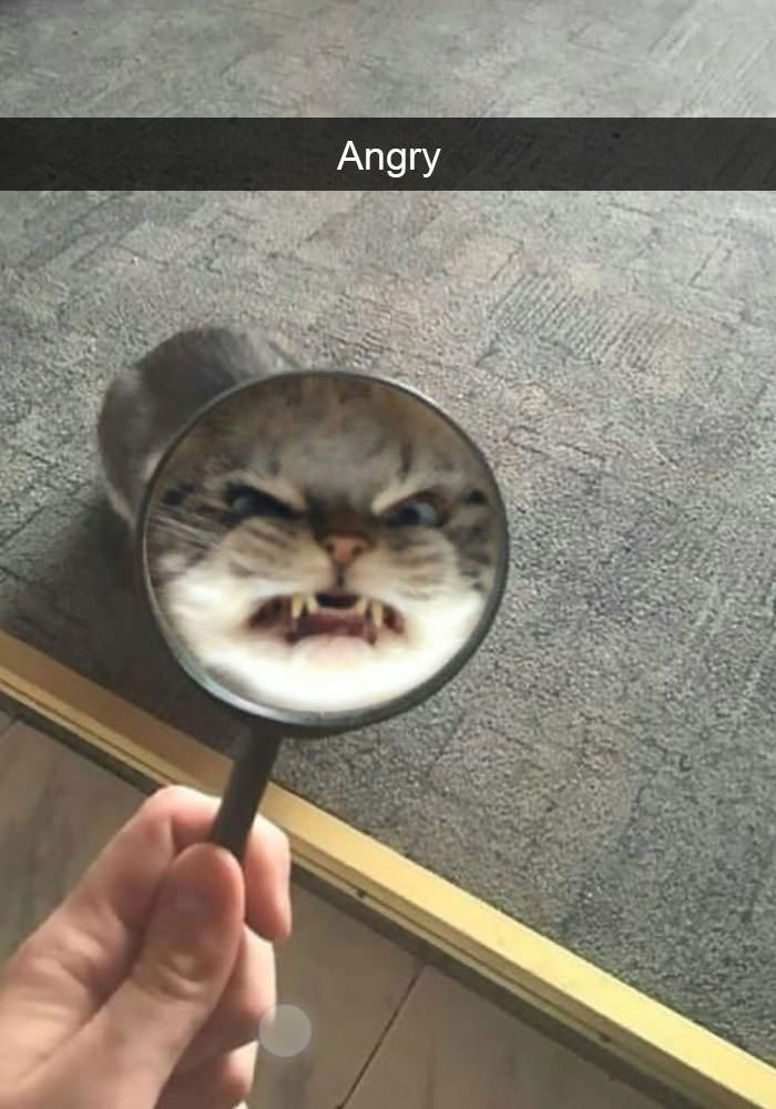 Cat - Angry