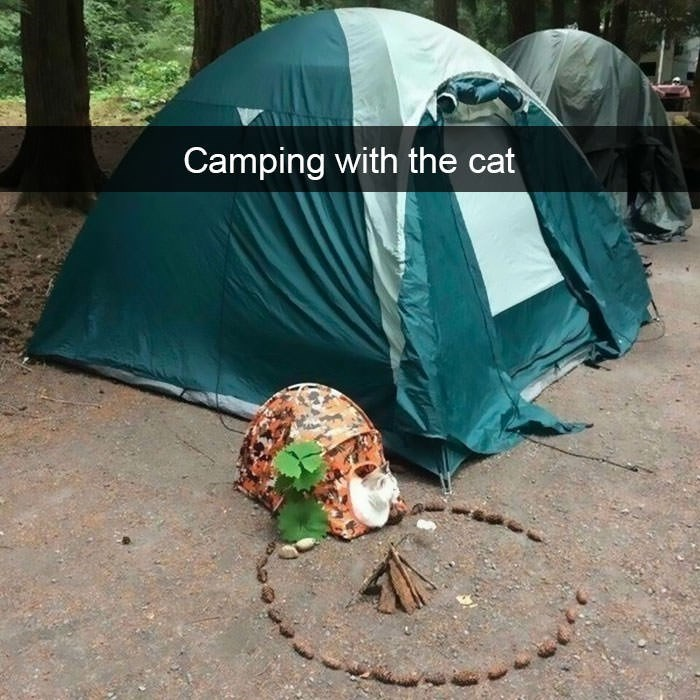 Green - Camping with the cat