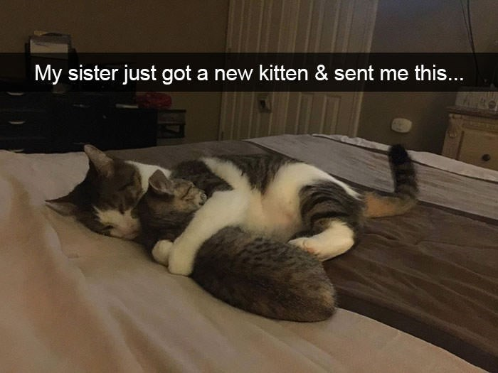 Cat - My sister just got a new kitten & sent me this..